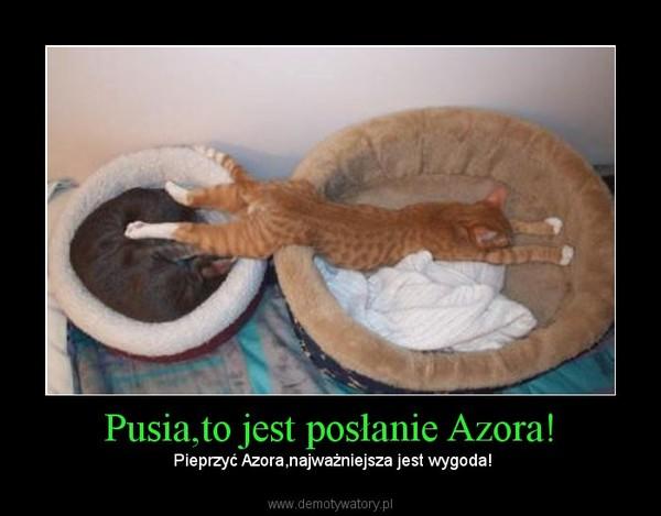 Pusia,to jest posłanie Azora! – Pieprzyć Azora,najważniejsza jest wygoda!