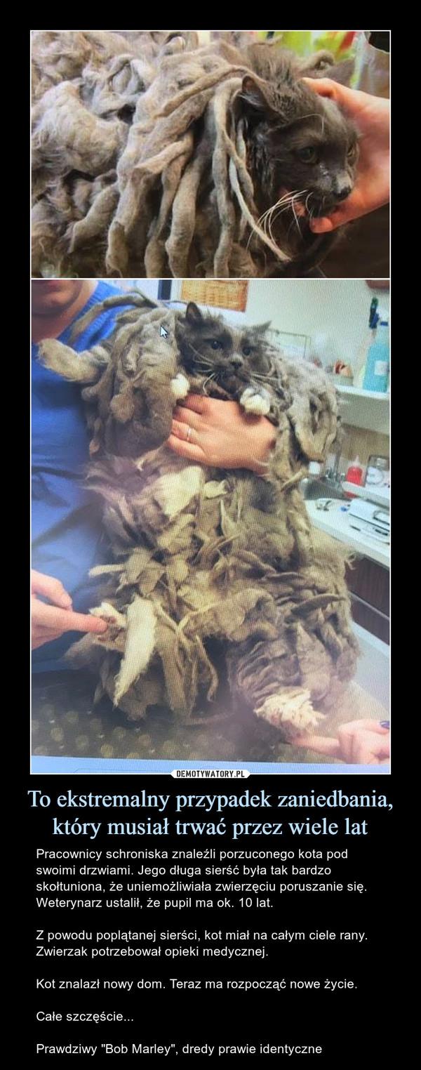 """To ekstremalny przypadek zaniedbania, który musiał trwać przez wiele lat – Pracownicy schroniska znaleźli porzuconego kota pod swoimi drzwiami. Jego długa sierść była tak bardzo skołtuniona, że uniemożliwiała zwierzęciu poruszanie się. Weterynarz ustalił, że pupil ma ok. 10 lat.Z powodu poplątanej sierści, kot miał na całym ciele rany. Zwierzak potrzebował opieki medycznej.Kot znalazł nowy dom. Teraz ma rozpocząć nowe życie.Całe szczęście...Prawdziwy """"Bob Marley"""", dredy prawie identyczne"""