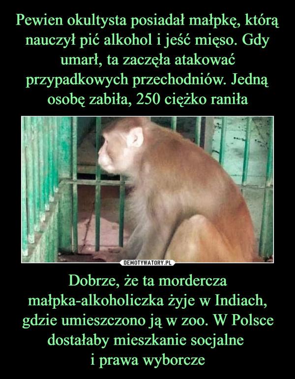 Dobrze, że ta mordercza małpka-alkoholiczka żyje w Indiach, gdzie umieszczono ją w zoo. W Polsce dostałaby mieszkanie socjalne i prawa wyborcze –