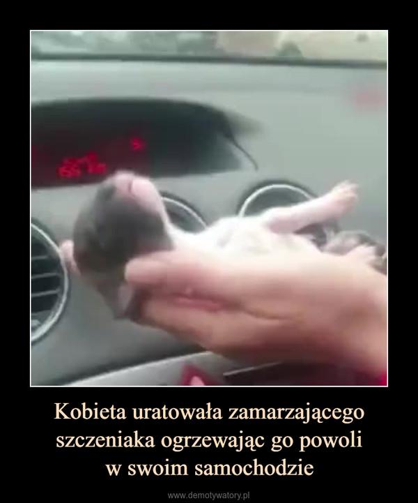 Kobieta uratowała zamarzającego szczeniaka ogrzewając go powoliw swoim samochodzie –