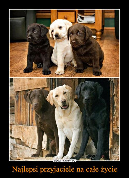 Najlepsi przyjaciele na całe życie