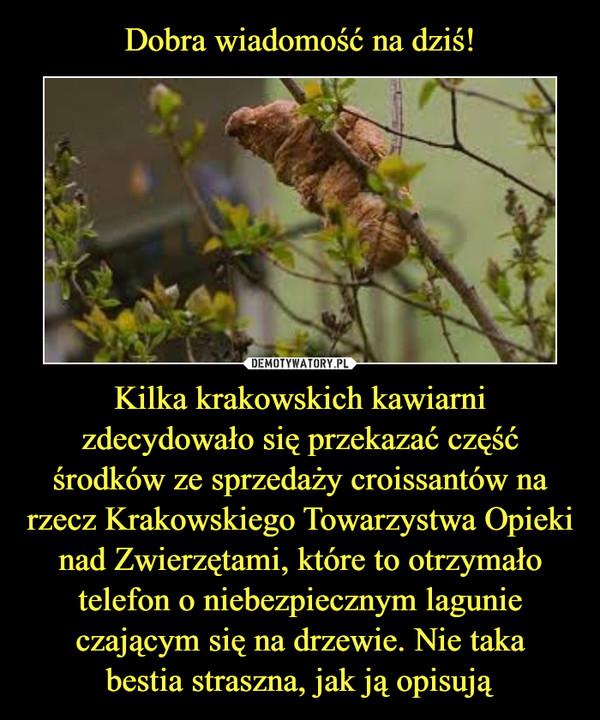 Kilka krakowskich kawiarni zdecydowało się przekazać część środków ze sprzedaży croissantów na rzecz Krakowskiego Towarzystwa Opieki nad Zwierzętami, które to otrzymało telefon o niebezpiecznym lagunie czającym się na drzewie. Nie takabestia straszna, jak ją opisują –