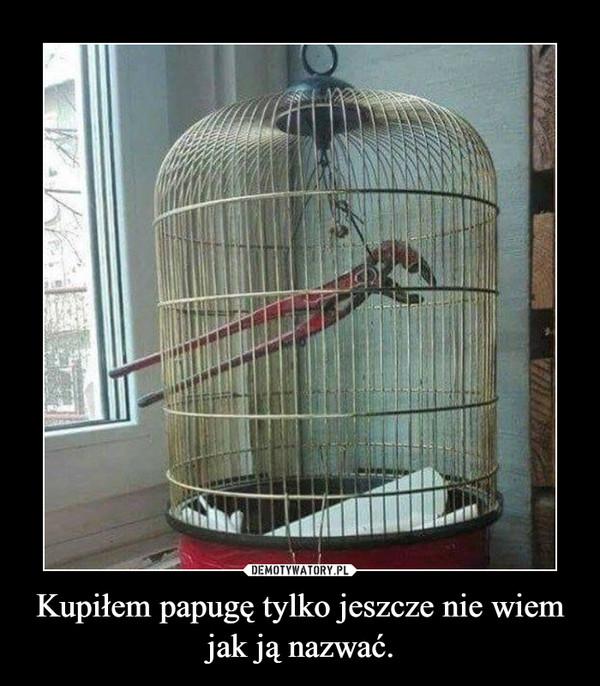 Kupiłem papugę tylko jeszcze nie wiem jak ją nazwać. –