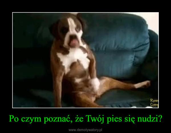 Po czym poznać, że Twój pies się nudzi? –