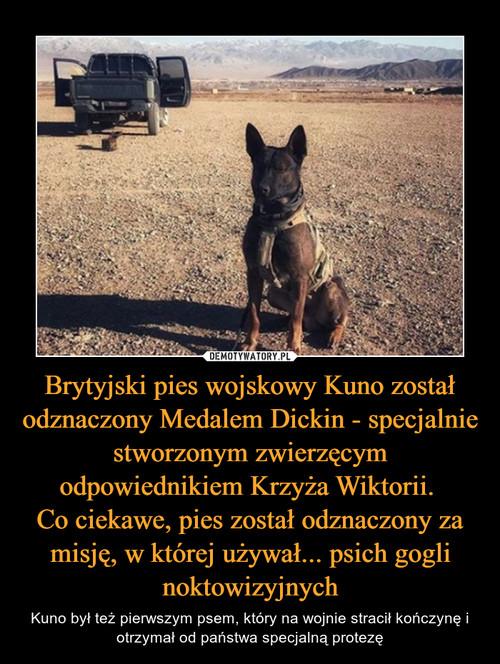 Brytyjski pies wojskowy Kuno został odznaczony Medalem Dickin - specjalnie stworzonym zwierzęcym odpowiednikiem Krzyża Wiktorii.  Co ciekawe, pies został odznaczony za misję, w której używał... psich gogli noktowizyjnych