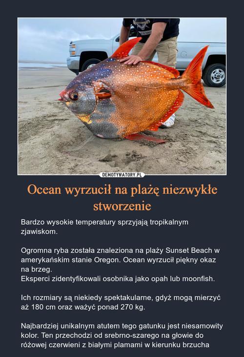Ocean wyrzucił na plażę niezwykłe stworzenie