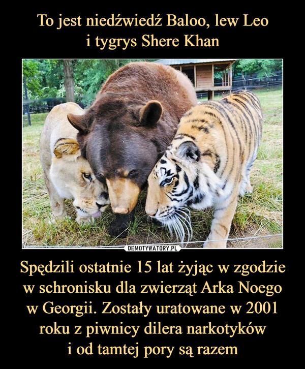 Spędzili ostatnie 15 lat żyjąc w zgodzie w schronisku dla zwierząt Arka Noegow Georgii. Zostały uratowane w 2001 roku z piwnicy dilera narkotykówi od tamtej pory są razem –