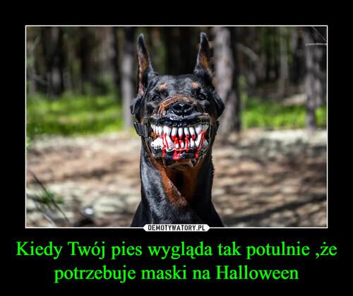 Kiedy Twój pies wygląda tak potulnie ,że potrzebuje maski na Halloween